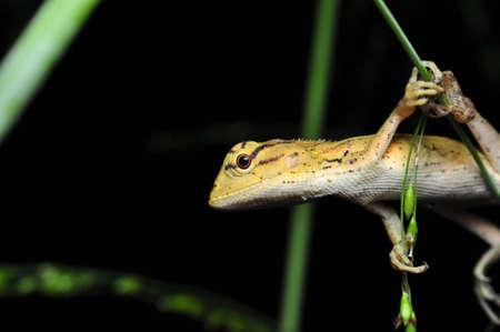 awaiting: Lizard Awaiting