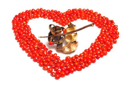 saga: Saga seed - Perfect Heart