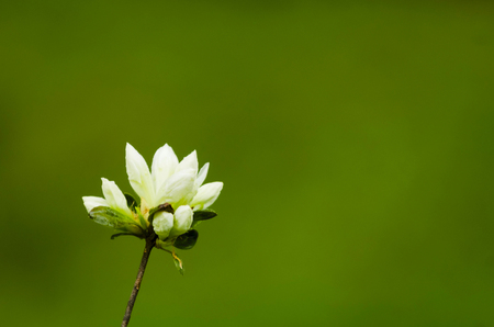White flower against a blurred green background 写真素材