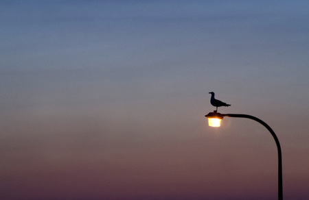Seagull Sits On Lamp Post During Twilight