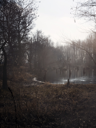 morass: Swamps in autumn. Cool dark lake in Primeval forest. Cold melancholic landscape with water vapor. Foggy mystery and mystic wetland with trees. Enigmatic mysterious dark swamp. Eerie situation Marsch.