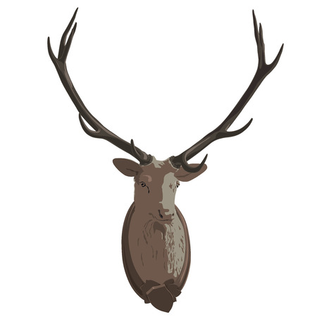 Mounted head of deer. Stuffed stag with antlers monumental. Hunting antique trophy. Taxidermy of deers head hung on a white wall. Flatten vector illustration master.