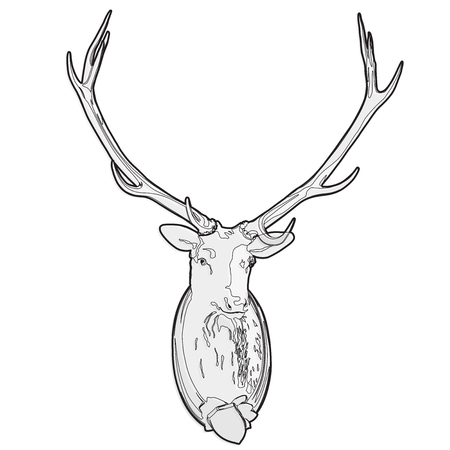 Mounted head of deer. Stuffed stag with antlers monumental. Hunting antique trophy. Taxidermy of deers head hung on a white wall. Outlined vector illustration master.