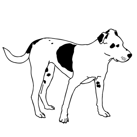 Black and white dog sitting. Smart and darling animal. Outlined cute dog. Flatten isolated master vector illustration. Illustration