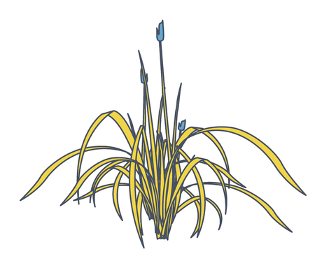 Outlined vector reed and water plants in mobile phone. Yellow isometric clump of reed growing in pool, lake or pond. Isolated individual flower bamboo reed. Vector illustration Illustration