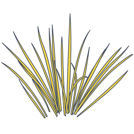 Outlined vector isolated reed. Yellow water plants in different variant, isolated on white background. Isometric clumps of reeds growing on pond. Individual rushes flower bamboo reed with green leafs Stock Illustratie