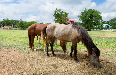 Horse farm in Thailand