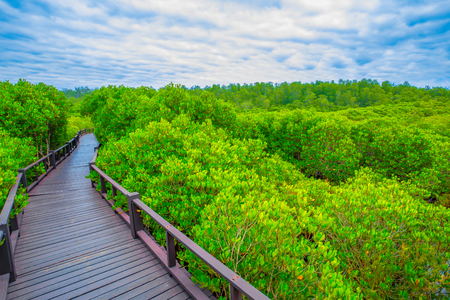 The wooden bridge walkway in mangrove forest at Pranburi Forest National Park Prachuap Khiri Khan Thailand Stock Photo - 84433411