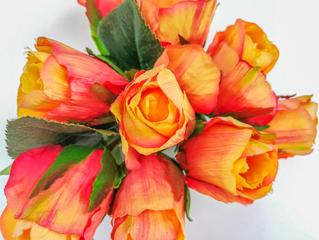 Orange roses isolated on white background Stock Photo - 84433444