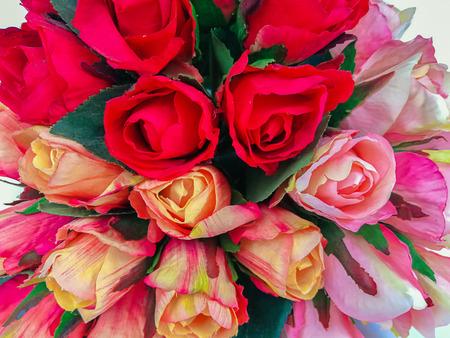 Orange and rad  roses isolated on white background Stock Photo
