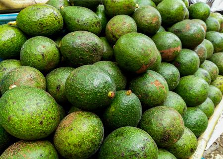 Green ripe avocado from organic avocado plantation