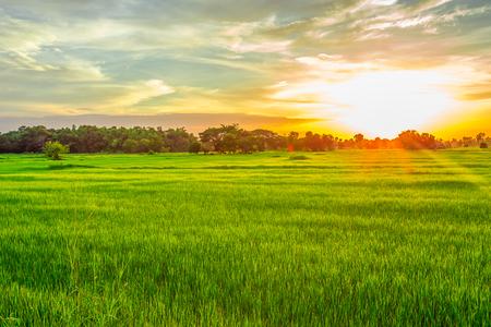 Landschap zonnige dageraad in een veld. Mooie reis schot Stockfoto