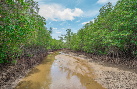 Mangrove and Roots, Janthaburi Province, Thailand