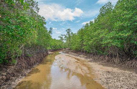 Mangrove en wortels, Janthaburi provincie, Thailand