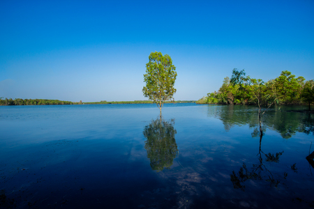 Flooding in rural areas. Panorama of village landscape with views of the river and the trees in the water. Flooding of the river in the countryside