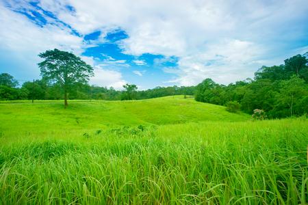 prairie herbeuse avec des herbes sauvages dans les montagnes. beau paysage dans la forêt un jour d'été