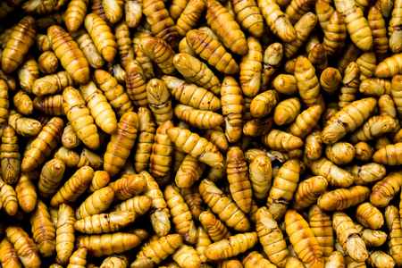 Crispy fried insects worm with salt  silk worms bamboo insect protein rich food - Pupa , Chrysalis