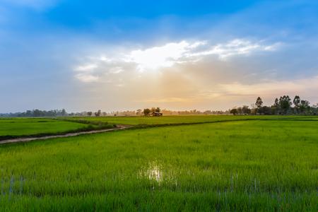 Padieveld op terrashelling in NAN, Thailand. natuurlijk landschap van rijstboerderij. teelt landbouw Stockfoto