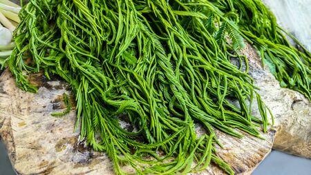 Climbing Wattle or Acacia pennata vegetables , Cha-om Vegetables on White Plate Stok Fotoğraf - 130100996