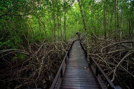 A Long wooden pathway in Mangrove forest background Stock fotó