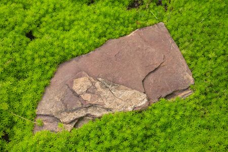 Close-up gray background of sett blocks different texture. Vintage, Rusty tiled, colorful, decorative stone pavement with green grass and moss