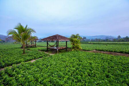 Classic and Acient Pavilion Thai Style in Thailand Garden Standard-Bild