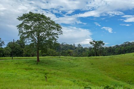 Tropical rainforest Landscape in Khao Yai National Park Nakhon Ratchasima Thailand