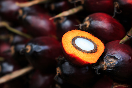 red palm oil: Palm oil fruit