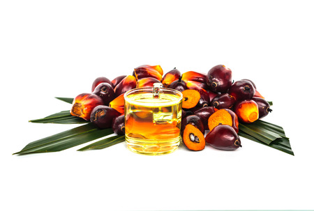 Oil Palm: Oil plam fruit with oil on white background