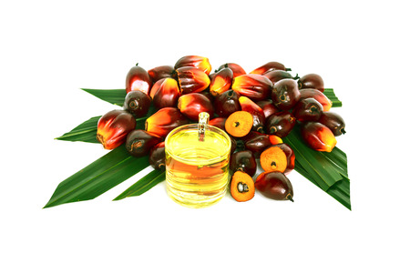 palm fruits: Oil plam fruit with oil on white background