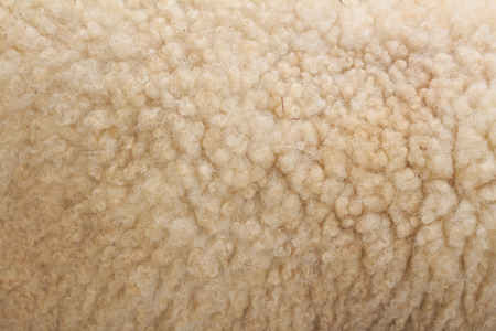 woolly: white woolly sheep fleece for background texture