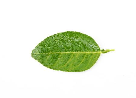 ime leaf Isolated on white background Stock Photo
