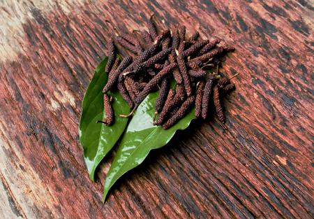 Long Pepper, Indian long pepper, Javanese long pepper (Piper retrofractum Vahl), spices and herbs with medicinal properties.