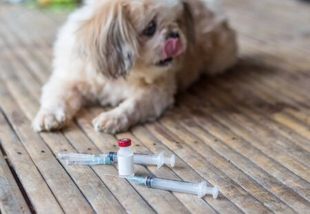 Rabies vaccines Dog vaccination against the rabies, hydrophobia was readily available. Imagens