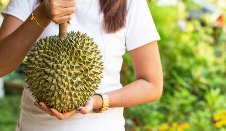 Handle durian show the durian to eat. Imagens