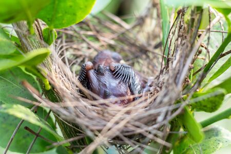 Young bird in the nest. Stock fotó