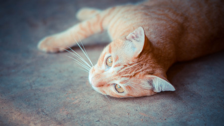 stray: Stray cat lying in wait with hope. Stock Photo