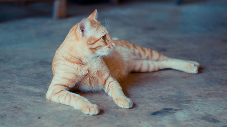 lying in: Stray cat lying in wait with hope. Stock Photo