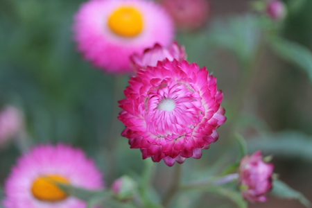 Pink paper flowers Natural background Stock Photo
