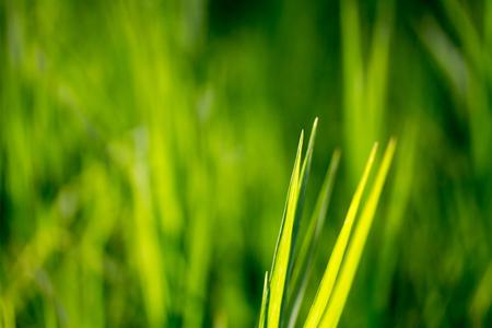 Green grass background nature Stock Photo
