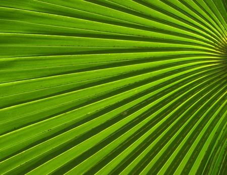 Palm leaf photo