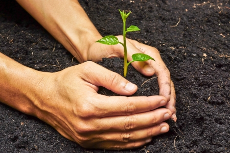 plants growing: two hands holding, growing and caring a young green plant