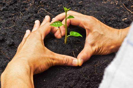 csr: two hands forming a heart shape around a young plant