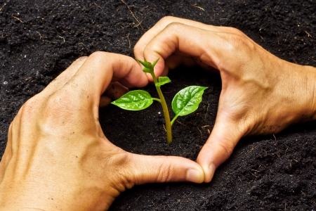 forestation: two hands forming a heart shape around a young plant