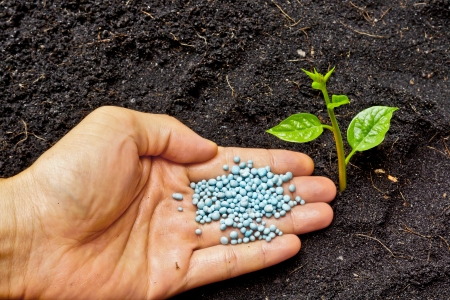 fertilizing: a hand giving fertilizer to a young plant