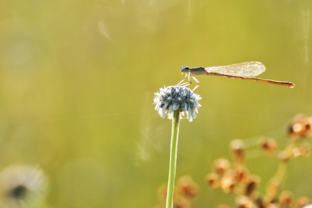 living thing: a dragon fly sitting on a wild flower Stock Photo
