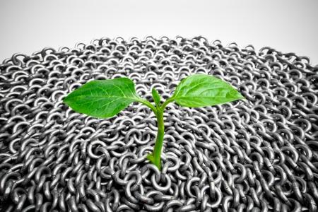vida social: una peque�a planta que crece en la superficie de la cadena