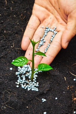 chemical fertilizer: a hand giving fertilizer to a young plant
