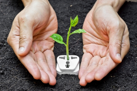 hands holding and caring a tree growing on a socket   green energy   save the world photo