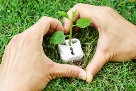 corporate waste: hands forming a heart shape around a tree growing on a socket  Stock Photo